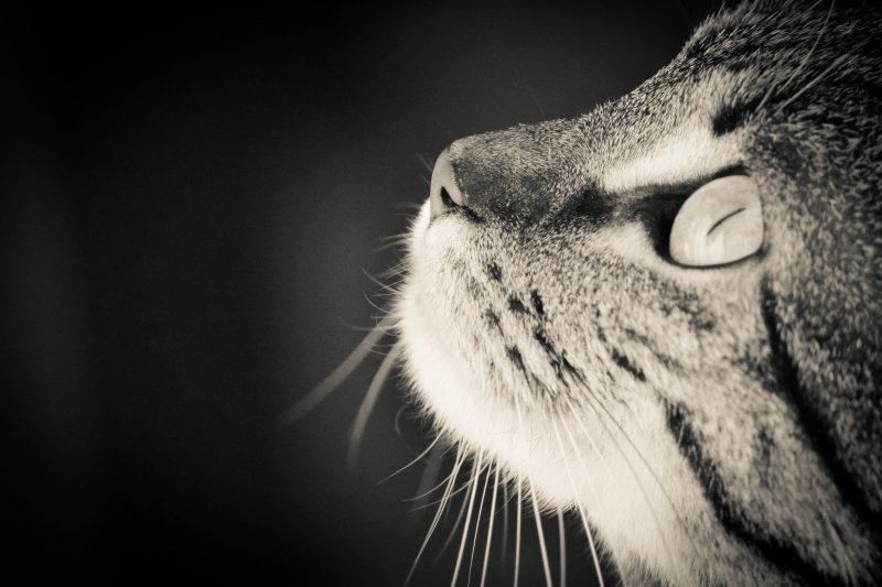 Effy's Photography - Chat noir et blanc