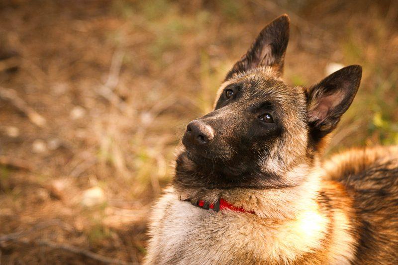 Effy's Photography - Photographe animalier