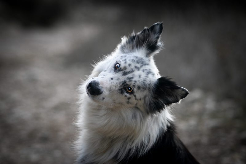 Effy's Photography - Photo animaux