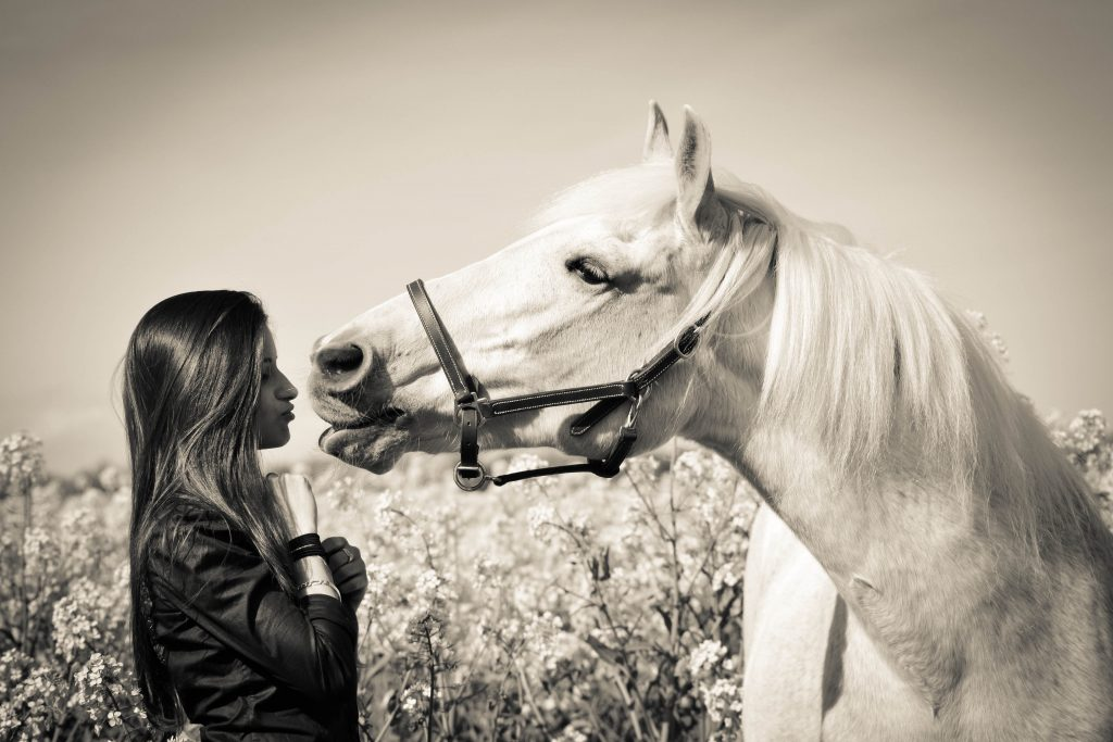 Effy's Photography - chevaux