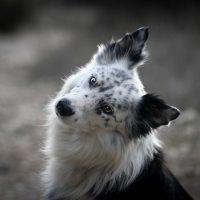 Effy's Photography - animaux